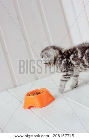 Small young kitten and orange bowl with kitten food
