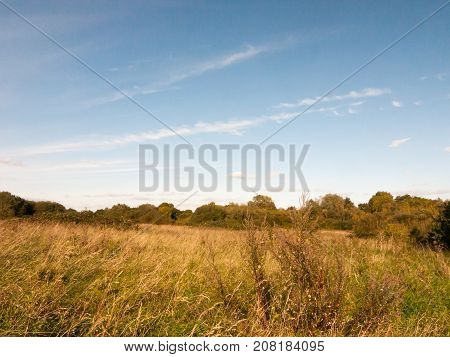Summer Yellow Grassland Field With Blue Sky