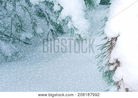 Snow-covered branches in the woods. Christmas fantastic nature