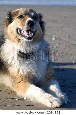 Annie The Dog On The Beach