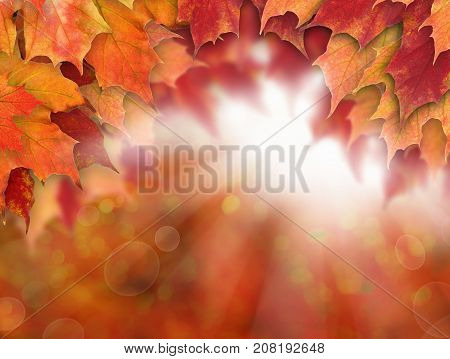 Autumn Background with Fall Maple Leaves Sun Light. Thanksgiving Day Background