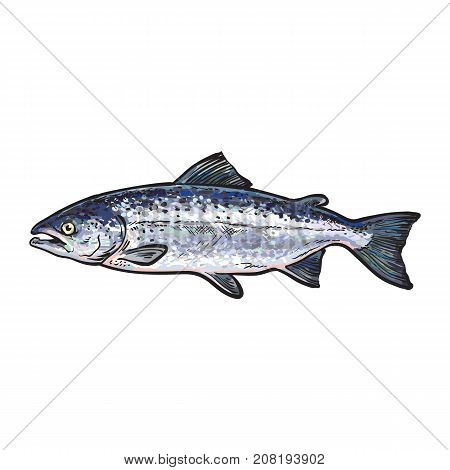 vector sketch cartoon style sea fish salmon. Isolated illustration on a white background. Seafood delicacy, restaurant menu decoration design object concept
