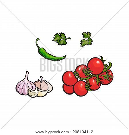 Vegetable - vine tomato, garlic, parsley and green chili pepper, sketch style vector illustration isolated on white background. Hand drawn tomato, garlic, parsley and chili pepper