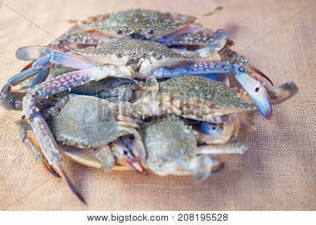 Blue Swimming Crab Or Flower Crab