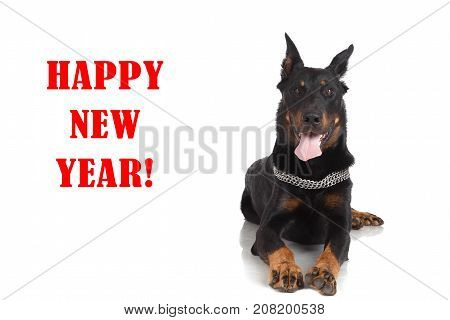 Beauceron Dog On White Background And Inscription 'happy New Year'