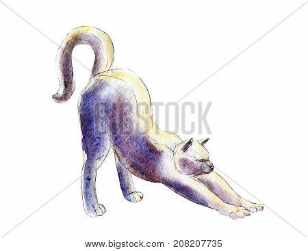 The cat stretches watercolor illustration isolated on white background.