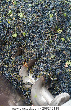 top view of grape processing metal machine squeezing cabernet sauvignon in a vineyard factory