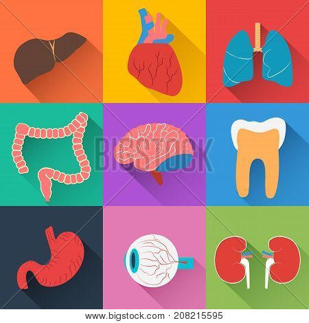 Medical health collection with human internal colorful organs icons on squares isolated vector illustration