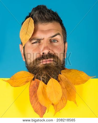 Hipster Or Bearded Guy In Autumn On Blue Background.