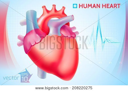 Medical anatomical cardio template with colorful human heart on light blue background vector illustration