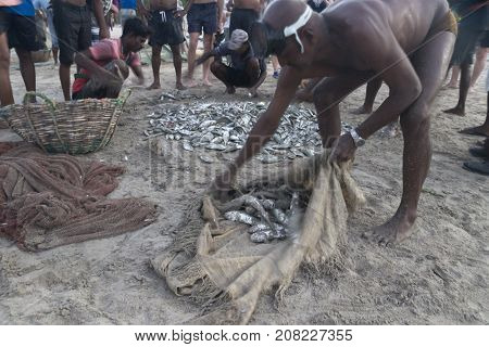 Uppuveli, Sri Lanka - March 26 2017: Local Fishermen Sorting Out The Fish Catch