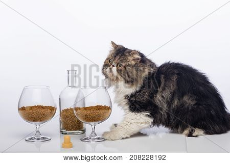 Black-and-white Persian cat, bottle from under cognac and two glasses for brandy filled with a dry feed for cats
