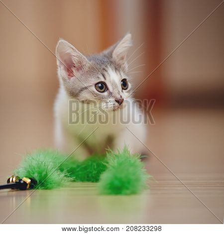Small kitten plays with a green fluffy toy.