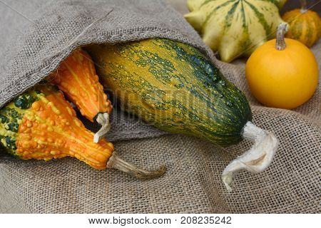 Assortment Of Orange And Green Ornamental Gourds On Rough Hessian
