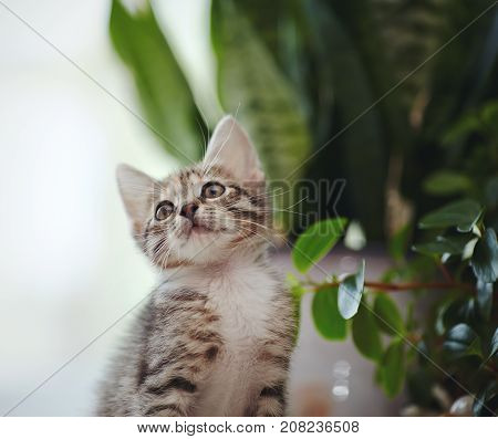 Portrait of a funny striped kitten near window plants