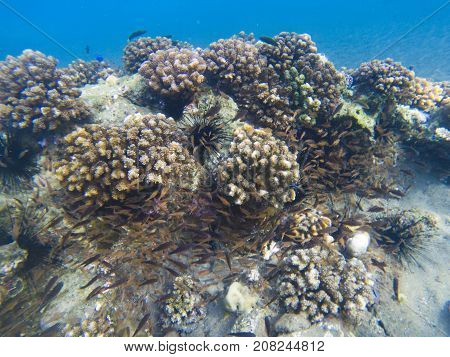 Coral reef formation. Exotic island shore shallow water. Tropical seashore landscape underwater photo. Coral reef animal. Sea nature. Sea fish in coral. Marine life undersea. Sunny coral landscape