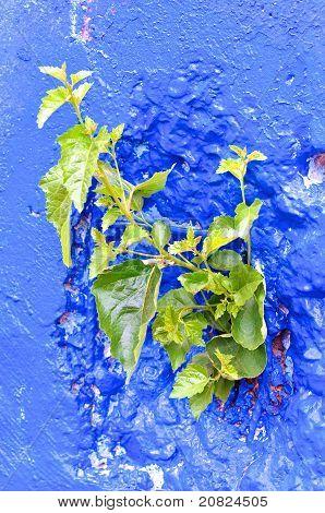 Concrete comming into leaf