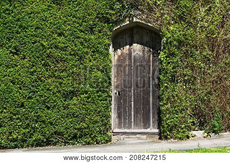 The old door in the wall. The wall was overgrown with a curly plant