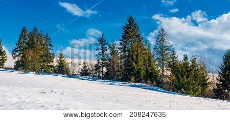 row of spruce trees on a snowy hillside. beautiful nature scenery on a fine winter day