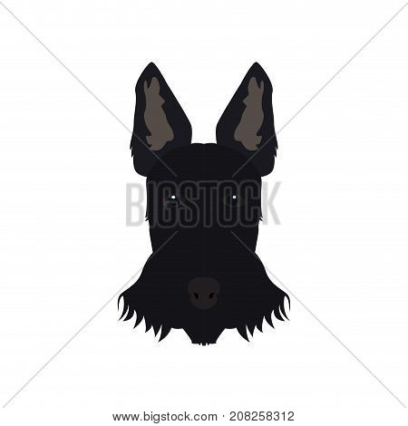 Isolated schnauzer avatar on a white background, Dog breed vector illustration