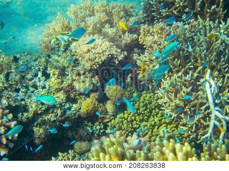Small neon fish in coral reef. Tropical seashore inhabitants underwater photo. Coral reef animal. Warm sea nature. Colorful sea fish and coral. Undersea view of marine life. Coral reef landscape