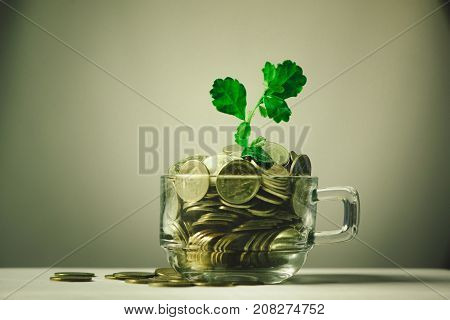 Little Plant Growing On Golden Coins In A Glass Of Coffee, On The White Background..