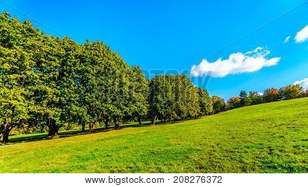 Trees along a country lane under blue sky near Fort Langley British Columbia