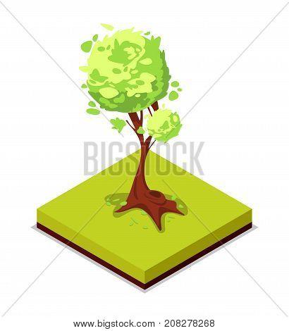 Green ash tree isometric 3D icon. Public park decorative plant and green grass vector illustration. Nature map element for summer parkland landscape design.