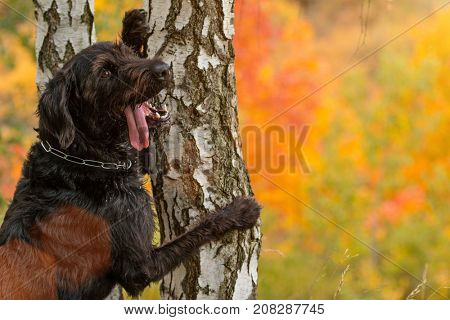 Black mutt dog posing in autumn park. Close-up.
