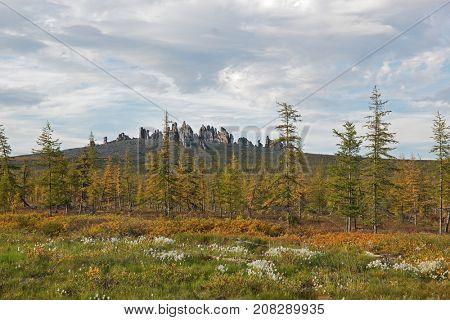Taiga and mountainous tundra landscape with rock pillars in background. Yakutia, Siberia