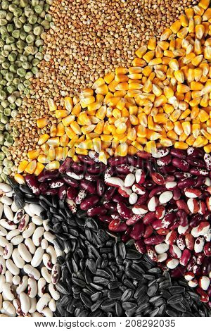 Different types of cereals and legumes