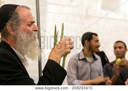 JERUSALEM, ISRAEL - OKTOBER 16, 2016: Traditional market before the holiday of Sukkot. Elderly religious Jew with grey beard in black skullcap is concentrating on checking ritual plant palm tree