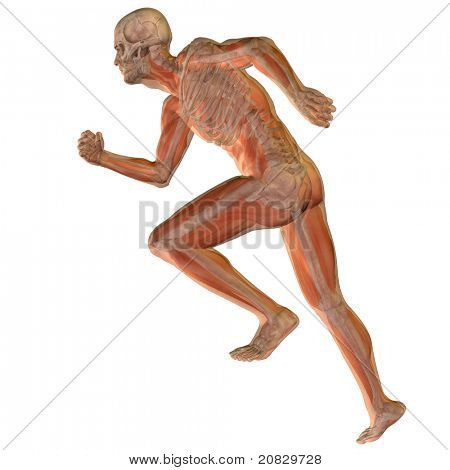 High resolution conceptual 3D human ideal for anatomy,medicine and health designs, isolated on white background. It is a man made of a skeleton and a transparent blue body as in a x-ray poster