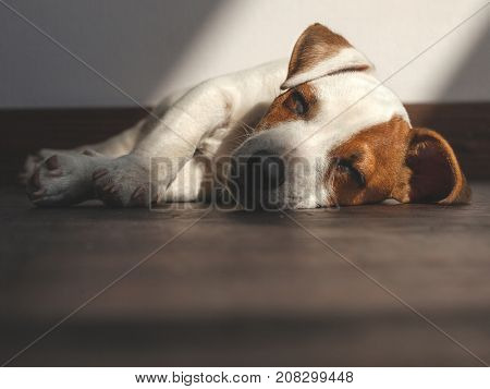 Puppy at home. Dog sleeping at warm floor. Pet