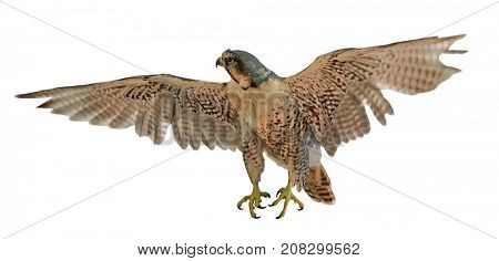 flying brown falcon isolated on white background