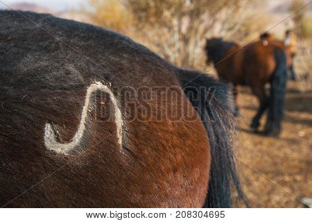 Closeup mark on the rump of the Mongol horse of Western Mongolia.
