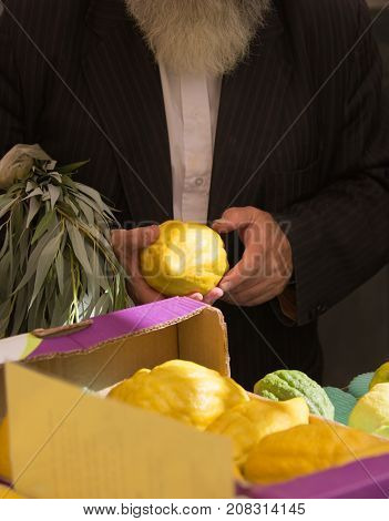 Sale of ritual plants on the traditional pre-holiday market in the capital of Israel, Jerusalem. The buyer chooses the citrus - etrog. Jewish autumn holiday Sukkot