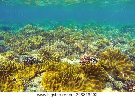 Underwater landscape with coral reef. Coral undersea photo. Seashore texture. Yellow sea plants. Sea bottom with coral ecosystem. Tropical seashore snorkeling. Marine relief landscape. Tropic lagoon