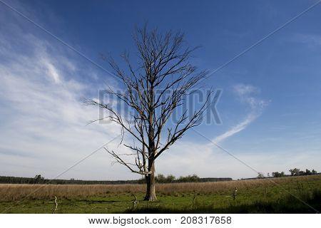 solitary dead tree in the plain field