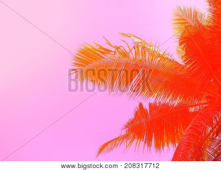 Palm tree on sky background. Palm leaf ornament. Pink and orange toned photo. Tropical island natural backdrop. Paradise island banner template with place for text. Summer holiday poster. Coco palm
