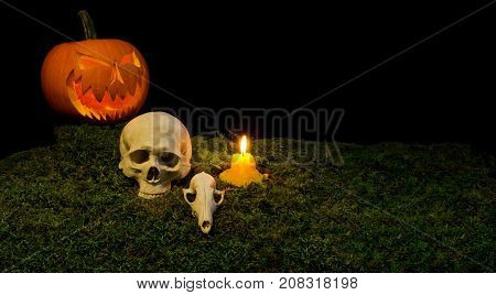 Halloween Pumpkin, Human Skull, Animal Skull, And Candles Glowing In The Dark On A Forest Moss.