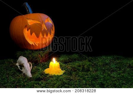 Halloween Pumpkin, Animal Skull, And Candles Glowing In The Dark On A Forest Moss.