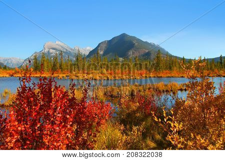 Fall foliage in Vermilion lakes area at Banff national park Canada