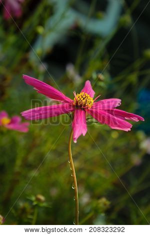 pink flower close-up against a background of vegetation. Side view