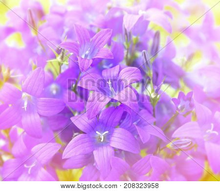 Natural background of flowers bluebells close-up in sunlight