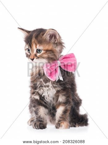 Cute little kitten with a plush bow on a neck on a white background cutout