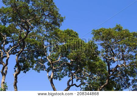 Green trees on sunny blue sky background. Tree branch with green leaf pattern. Blue sky view through natural ornament. Nature and environment banner. Sunny park greenery. Green tree summer banner.