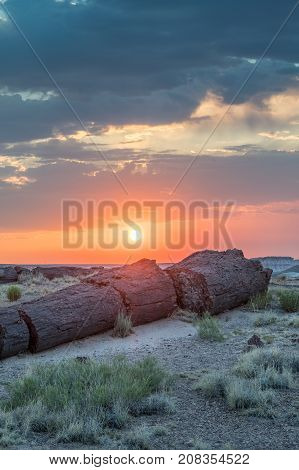 Sunset Over Pieces Of Petrified Wood