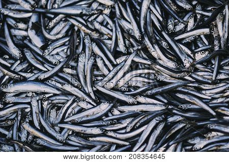 Fresh fish in the market from the saltwater