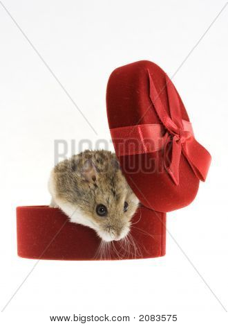 Mouse From The Gift Box